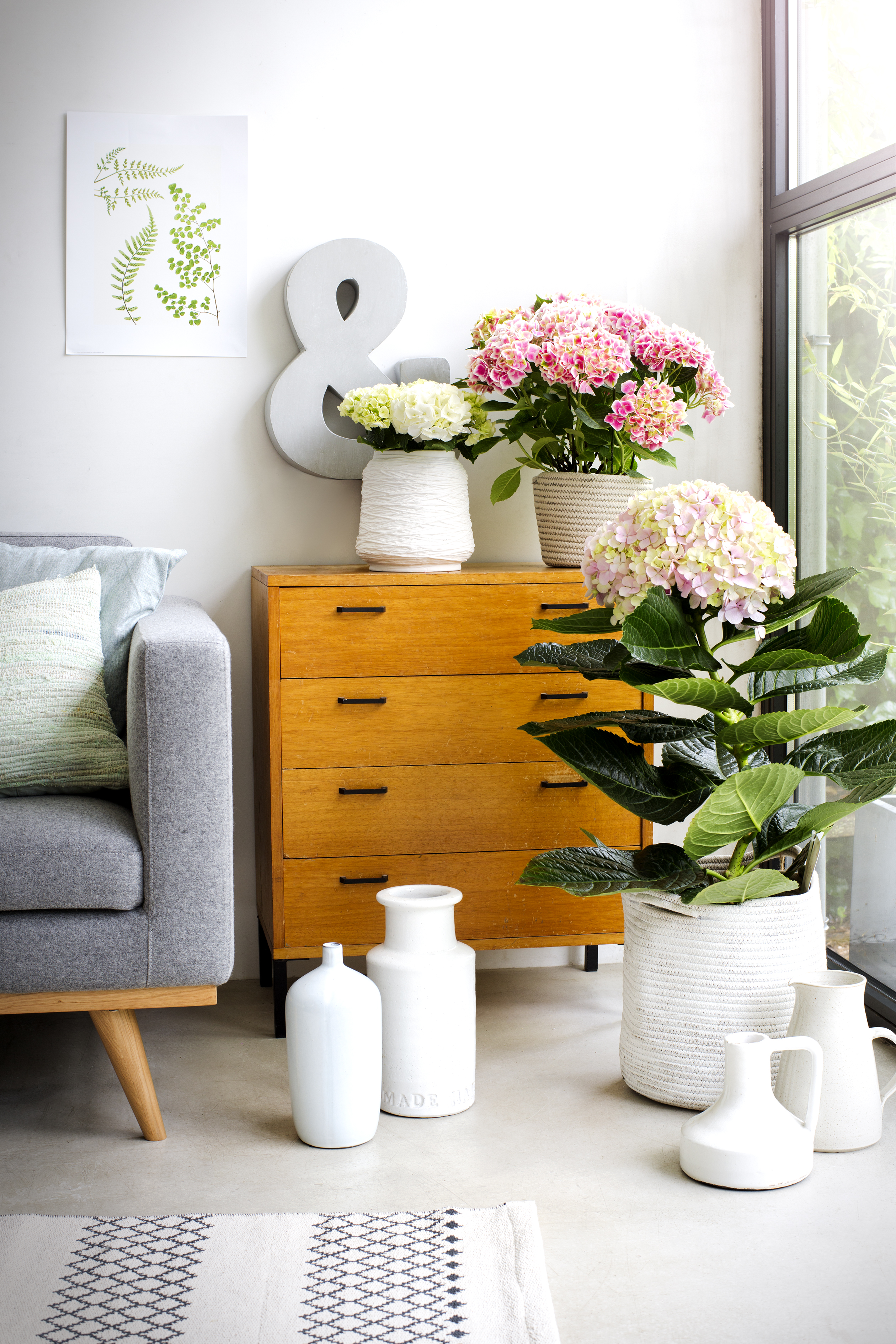 grote hortensia kopen